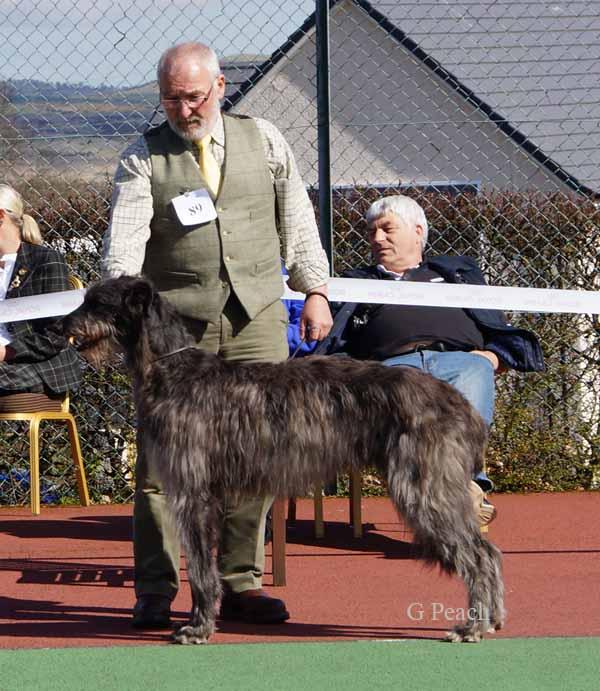 Mcduff Dog Breed